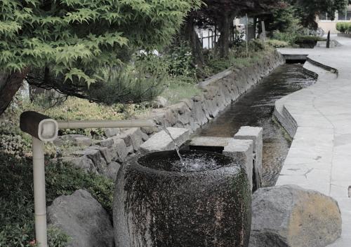 辰巳の庭の湧水