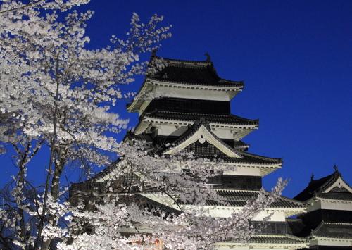 松本城 夜桜会