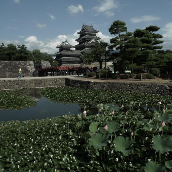 蓮の花咲く松本城